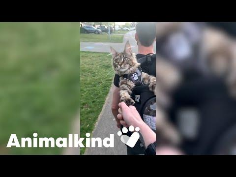 Fig the cat gives hiking two thumbs up #Video