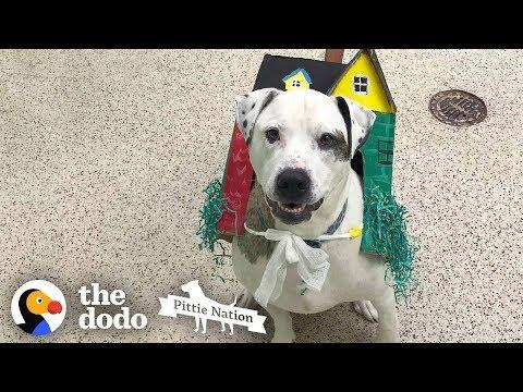 Dog Stuck In Shelter Over 1,000 Days Can't Stop Kissing His Family | The Dodo Pittie Nation