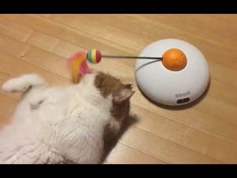 Cat Loses Purpose In Life - Your Daily Dose Of Internet
