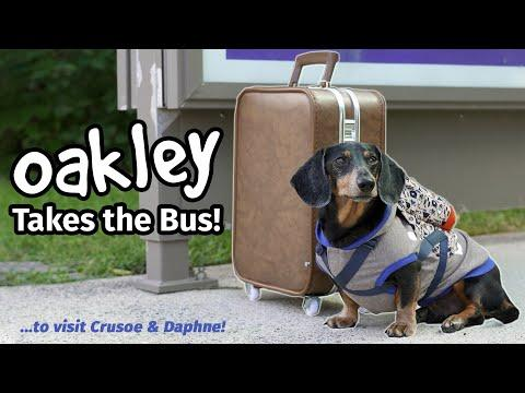 OAKLEY TAKES THE BUS VIDEO - Goes to Visit Crusoe & Daphne!