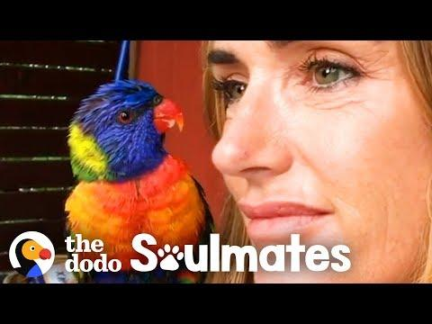Wild Lorikeet Brings Girlfriend to Meet Human Mom Video