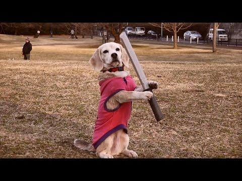 Samurai Dog Holds A Sword In His Paws