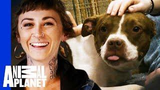 Vladimir Finds A New Home Where He Learns 'How To Dog' | Pit Bulls & Parolees
