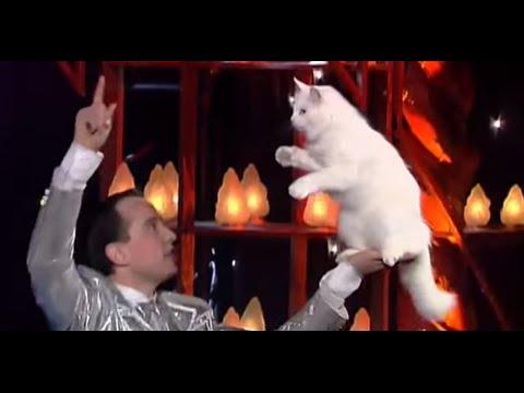 Amazing Angorian Cats - The World Greatest Cabaret