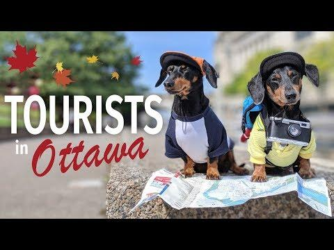 Ep #2: Crusoe & Oakley are TOURISTS in Ottawa! - (Cute & Funny Dog Travel Video)