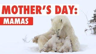 Mother's Day Animal Moms | Happy Mother's Day 2018