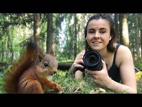 I rescued four baby red squirrels [The Squirrels & Me] #Video