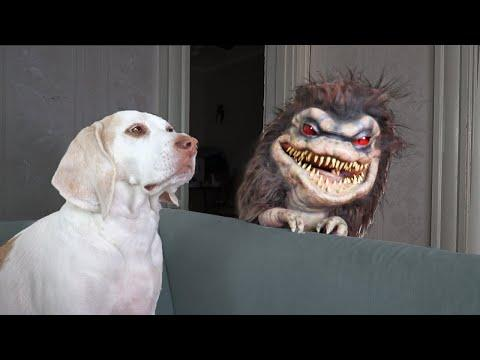 Dogs Exterminate Critter: Funny Dogs Maymo & Potpie Critters Prank