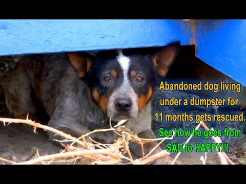 Abandoned Dog Lives Under A Dumpster For 11 Months, Then This Happens!