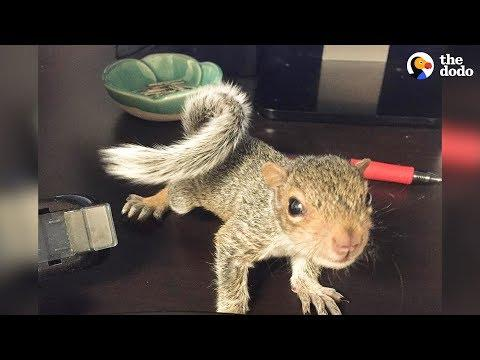 Rescued Baby Squirrel Is Queen Of Her New Home