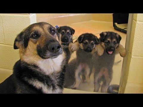 Funny and Cute German Shepherd Puppies Compilation Video #01