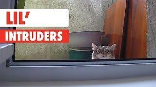 Lil Intruders