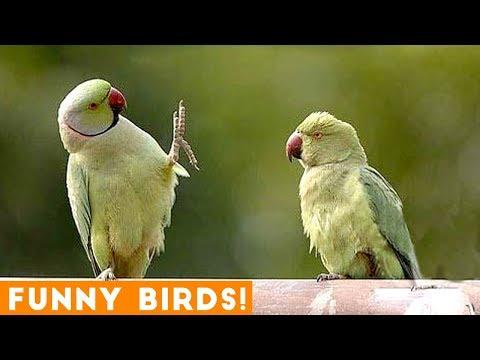 Funny Parrot and Bird Video Compilation To Brighten Your Day!