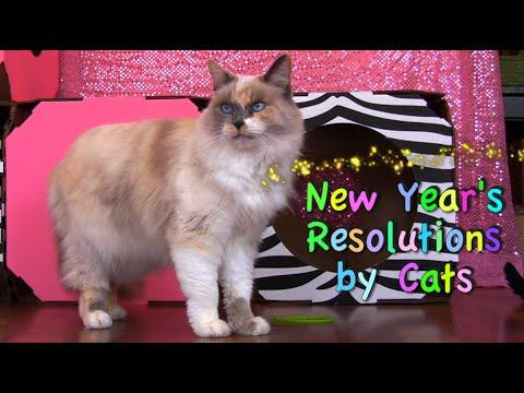New Years Resolutions By Cats 2015