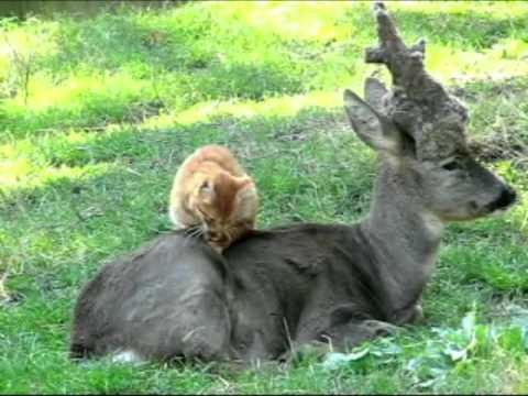 Cat And Deer Are Best Friends