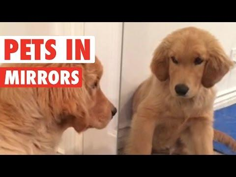 Pets Looking In Mirrors || Awesome Compilation