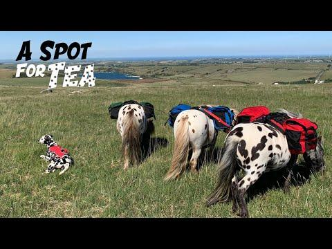 Mini Moorland adventure with all the SPOTTY horses & Dog Video!