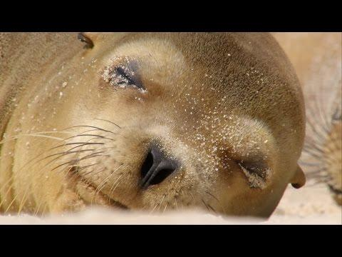 Sharing A Beach With Baby Sea Lions