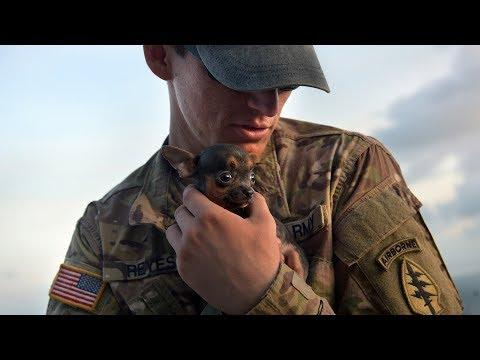 Dogs Welcoming Soldiers Home Compilation (2018)