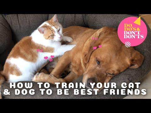 Training Your Cat and Dog to Be Best Friends Video | Do-do's & Don't-don'ts