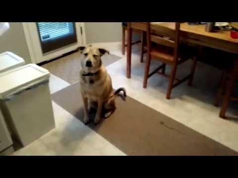 Dog Gets Super Excited At The Site Of Food