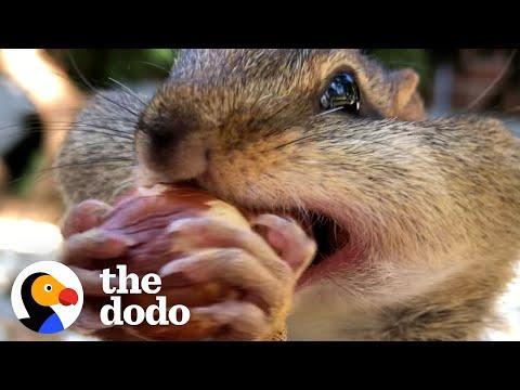 Guy's Best Friends With 14 Wild Chipmunks Video