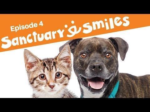Morning motivation with kittens meowing and wiggly dog in Sanctuary Smiles Ep 4
