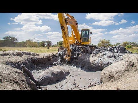 Dramatic Rescue Of An Elephant Stuck In Mud