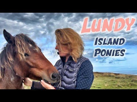 Lundy Island Ponies Video - Emma Massingale