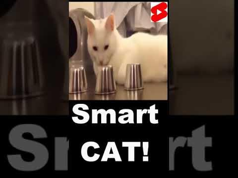 Smartest Cat in The World Video! #Shorts