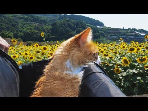 Picnic with my cat (shaved ice & lemonade) JunsKitchen #Video