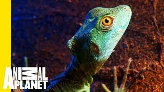 What Exactly Is a Lizard?
