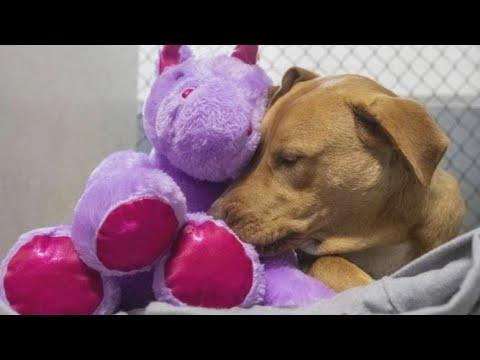 Stray Dog Finds Fur-Ever Home With Stuffed Unicorn Video