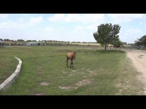 How A Mama Horse Teaches Her Baby
