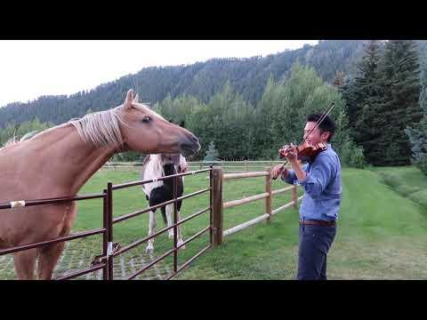 Horses like violin playing Video