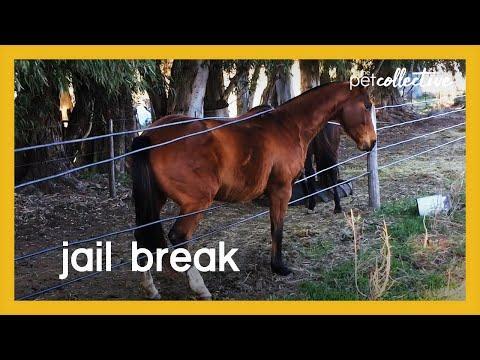Best Animal Jail Break Ever Video
