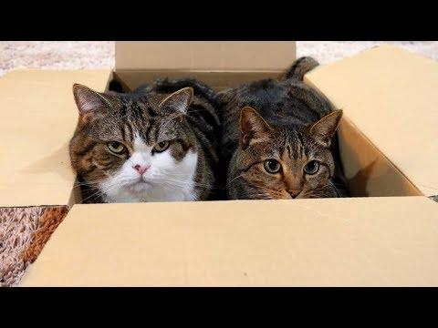 Box and Maru and Hana 4