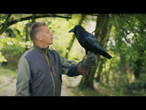 The Raven Who Solves Puzzles Video | Animal Einsteins