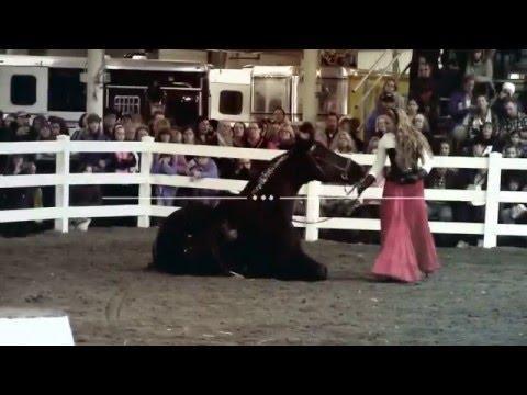 Sandra Beaulieu {Equine Affaire} Friesian Demo 2015 {Bitless Dressage}