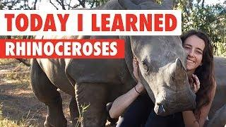 Today I Learned: Rhinoceroses