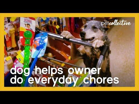 Well-Trained Dog Helps Owner Do Everyday Chores Video