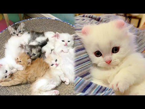Cute Kitten Marshmallows Video