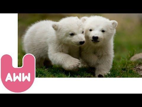 Nela And Nobby, A Cute Polar Bear Story