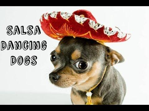 Salsa Dancing Dogs