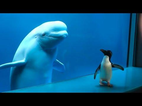 Whale Sees Penguin For First Time. Your Daily Dose Of Internet