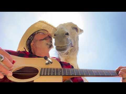 Three Donkeys Love A Star is Born #Video