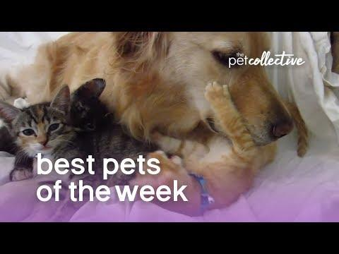 Best Pets of the Week - BEST FRIENDS