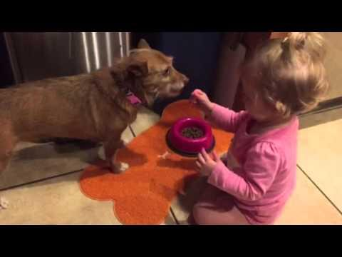 Cute Dog Fed By Adorable Baby
