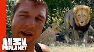 Dave Salmoni's Dangerous Mission To Live With Wild Lions