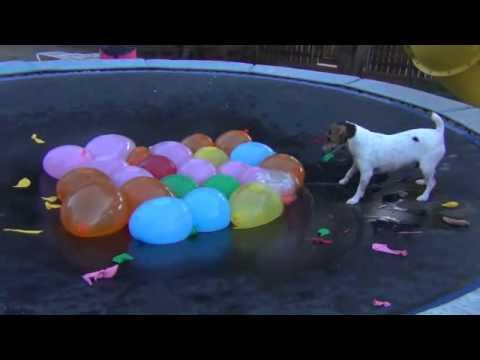Spaz Attacks Water Balloons On The Trampoline